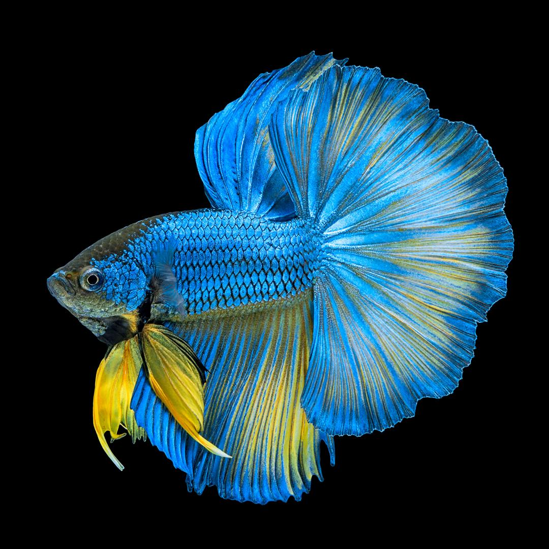 Saltwater Fish Store, Melbourne, Palm Bay, Rockledge ...
